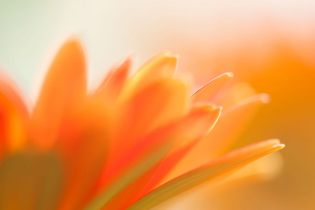 A close-up image of an orange flower | Motif