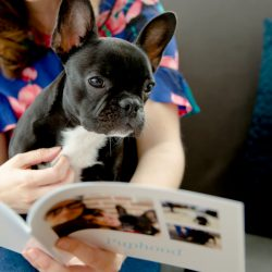 A girl and her french bulldog looking at a custom pet brag book | Motif