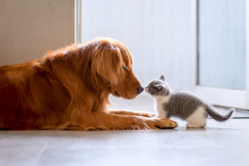 A dog and kitten touching noses | Motif