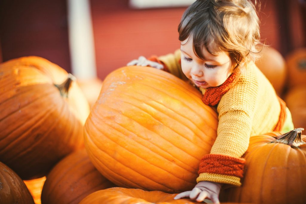 Toddler girl playing in a pumpkin patch