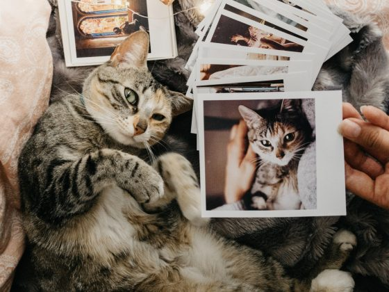 Cats and photos