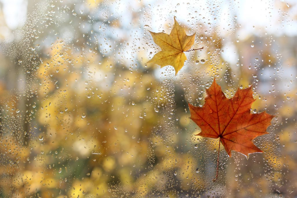 Raindrops on your window can make for great photography no matter what the season.