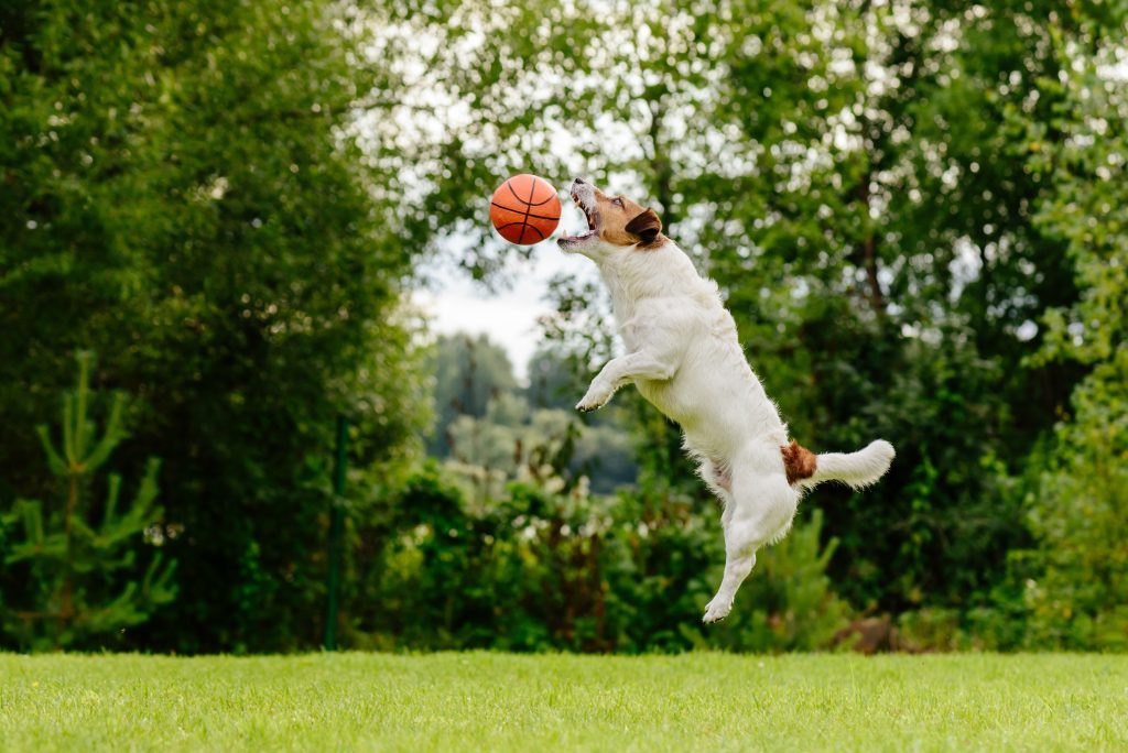 Catch your dog jumping for a basketball or other action shot with the right camera settings.