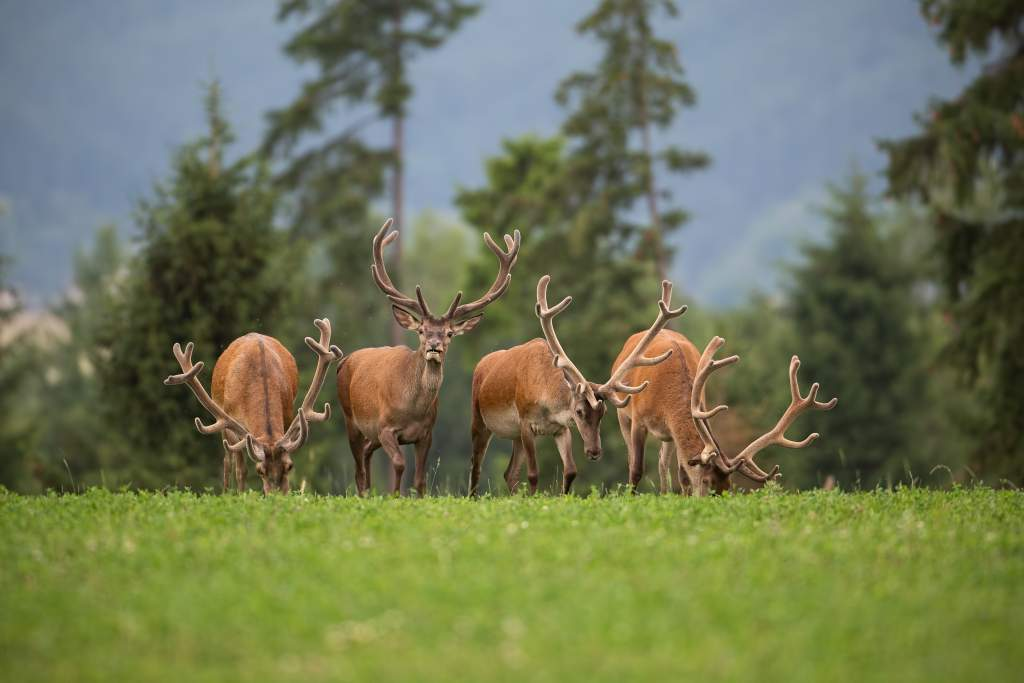 Wildlife photography ideas: get ahead of animal, they're facing your location