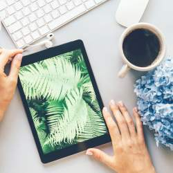 Overhead shot of woman at her desk with coffee reviewing photo of ferns she took with iPad camera.