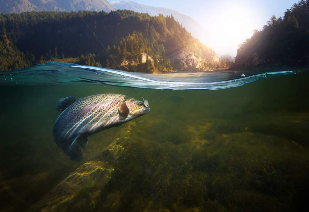 Half underwater photo of a fish swimming below and mountain landscape above.