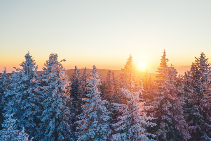 Stunning Christmas picture ideas include a forest full of snowcapped trees at sunset.