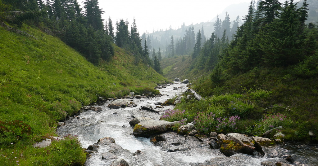 The forest stream acts as leading lines for the viewer, as they follow the stream to the background of the photograph.