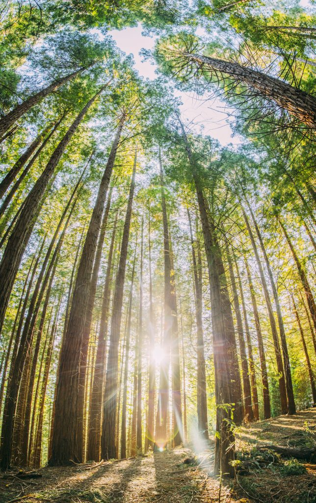 A vertical panoramic photo highlights the height of trees, monuments, or large buildings.