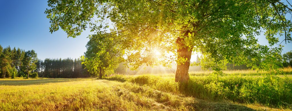 Tree foliage in beautiful morning light with sunlight in summer. Sunrise on the field with hay, trees and sun