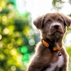 National Puppy Day Is March 23: Tips for Photographing Dogs